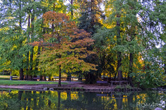 Fall in park (Rom4rio Photography) Tags: nikon nikkor nikond3100 nature tree amateur outdoor colorful water awesome atmosphere beautiful interesting amazing