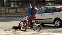 City Dog Hustler (TERRY KEARNEY) Tags: dog cycle car automobiles backpack animals canoneos1dmarkiv daylight dogs day explore europe england flickr kearney landscape liverpool merseyside oneterry outdoor people streets road terrykearney urban 2018 bike doghustler