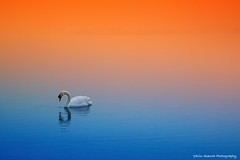 Schwanensee (Yarin Asanth) Tags: bodensee shore germany überlingen snow winter2018 water schwanensee swan colours mist fog blue orange yarin'sorangeseason lakeconstance yarinasanthphotography gerdkozikfotografie
