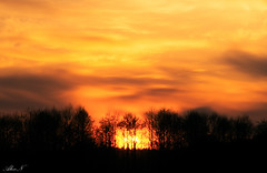 Sunset (sahar19715) Tags: wood sony clouds day evening sunrise yellow trees light ray rays