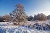 Winterlicher Schlosspark (Lilongwe2007) Tags: ahrensburger schloss schleswig holstein deutschland natur hopfenbach wiesen schnee winter bäume pflanzen landschaft eis frost sonne