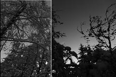 snow in black'n'white X by cyberjani - winter home series