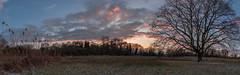 Woodpecker Tree (dusk_rider) Tags: woodpecker tree lone snow snowy hitchin hertfordshire nature sunset nikon d7200 panorama 1224mm nikkor f4 dusk rider landscape england english sky grass 7dwf