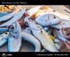 998_D8B_8594_bis_La_Cala_Palermo (Vater_fotografo) Tags: palermo sicilia italia it pescatori pescatore pesce pescheria vaterfotografo ciambra clubitnikon cielo controluce nikonclubit nikon mercato