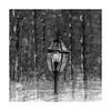 Lightpost no.2 (SopheNic (DavidSenaPhoto)) Tags: impressionisticphotography trees lightpost snowstorm snow monochrome multipleexposure light bnw fuji bw xt2 blackandwhite fujifilm impressionism