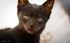 What's up? (Dani Maier) Tags: ghazoua marrakechtensiftalhaouz marokko ma cat katze