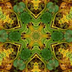 Kaleido Abstract 1731 (Lostash) Tags: art nature edited kaleidoscopes patterns symmetry shapes