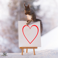 red squirrels on painting with a  heart  and a pencil (Geert Weggen) Tags: red nature animal squirrel rodent mammal cute look closeup stand funny bright sun heart love valentine holiday tender logo winter snow passion book background flirt care gentle charm painting pencil art geertweggen bispgården jämtland sweden geertweggenhardekozweden ragunda