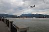 Flyover (mag3737) Tags: flyover seaplane brockton point stanleypark