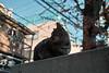 neko-neko2028 (kuro-gin) Tags: cat cats animal japan snap street straycat 猫 sigma dp2
