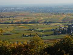Blick über die Pfalz (A.Dragonheart) Tags: landschaft landscape pfalz rheinlandpfalz herbst autumn fall weinberge vineyard grapevine vine rhinelandpalatinate palatinate