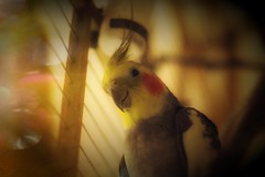 Day11 (a_salnikova) Tags: highiso 365project 365 day11 bird parrot canon manualfocuce oldlens manualfocus