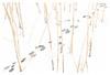 The silence of the reeds (leo.roos) Tags: reeds riet tracks sporen ijs ice frozen snow sneeuw winter westland wollebrand a7rii meyerprimoplan5819 exakta 1954 darosa leoroos dayprime day58 dayprime2018 dyxum challenge prime primes lens lenzen brandpuntsafstand focallength fl