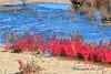 PA230527t_e (mrkevinw08) Tags: portugal algarve parquenaturaldariaformosa parque natural riaformosa