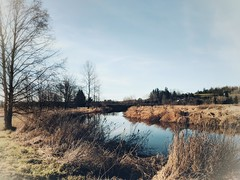 Wilband. (thnewblack) Tags: google snapseed pixel2xl pixel android smartphone outdoors beautiful wilband britishcolumbia 122mp hdr f18