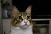 DSC_0138 (javierpoves) Tags: interior gatita kitty gatos animales