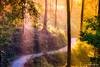 Golden Mist (bnilesh) Tags: kerala munnar outdoor fog golden india landscape mist nature sunbeam sunrise tourism travel trees