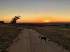 sunrise sears the smoke (stillshunter) Tags: australianlandscape landscape countrylane farmlane farmroad countryroad bushfire smoke dawn sunrise southerntablelandsnsw traildog trailrunning trailrun