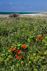 IMG_6498-1 (Andre56154) Tags: italien italy italia sardinien sardegna sardinia strand beach küste coast flower landschaft landscape himmel sky meer ozean ocean