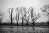 Winter im Blockland (pelzwanze) Tags: baum blockland sw winter tree bw