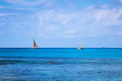 Sailboats (buffdawgus) Tags: canonef24105mmf4lisusm canon5dmarkiii sailboats pacificocean seascape lightroom6 topazsw oahu hawaiinislands hawaii sailboat waikiki