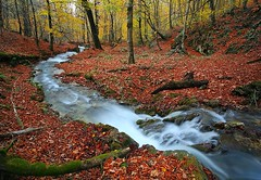 Autumn in the beautiful forests of northern Iran. (Ali Shokri / www.alishokripix.com) Tags: tree scene colors valley river water forest autumn iran landscape nature