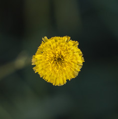 Tiny yellow (Justeffie) Tags: flower flor flores nature natural naturaleza green tiny small leaf close up zoom colors yellow