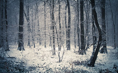 Winter Forest (Netsrak) Tags: atmosphäre baum bäume eu eifel europa europe februar forst landschaft natur nebel schnebel schnee stimmung wald atmosphere fog forest landscape mist mood nature snow tree trees woods meckenheim nordrheinwestfalen deutschland de