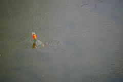Flasche im Eis (carminecrocco) Tags: eis ghiaccio flasche bottiglia