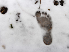 Bare footprint in snow (Phil_Footguy) Tags: barefoot footprint bare feet walk walking impression barefooter barefooting snow ice winter ground england uk nature freedom outdoors outside