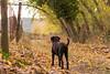 No dejes camino por vereda (AVazquez_Repi) Tags: naturaleza paisaje otoño camino vereda elrepilado jabugo huelva mascota hojas calma tranquilidad