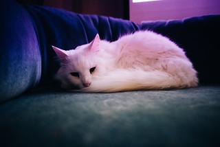 Icie the Technicolor Dreamcat