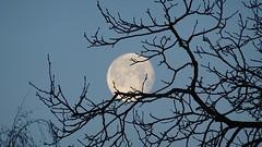 Mond (HomelessJedi_024) Tags: lunar moon mond baum 02022018 februar vom 2018