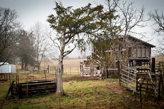 Cedar tree & shed - Anderson S.C. (DT's Photo Site - Anderson S.C.) Tags: canon 6d 24105mml lens andersonsc southcarolina rural country farm roads barn cedar pasture fence vanishing vintage disappearing southern america usa pastoral landscape southernlife post