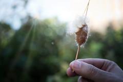 fly (annykita) Tags: newyork nature blow flower shine sunray