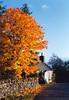 Golden autumn tree (M McBey) Tags: autumn fall tree rural golden nikkormat 50mmf20ailens kodachromefilm
