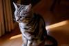 _NCL2799 (chitoroid) Tags: nikond750 nikkor50mmf18g japan hokkaido sapporo cat