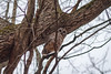 AllwaysLookUp (jmishefske) Tags: 2018 above nikon owl halescorners woods d500 tree barred park milwaukee wisconsin whitnall february