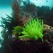 Arrecife2