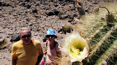 117 November;  Kandelaber-Kaktus blüht - now they're in bloom (roving_spirits) Tags: chile atacama atacamawüste atacamadesert desiertodeatacama désertcôtier küstenwüste desiertocostero coastaldesert