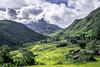 Sapa Landscape (Aces Hai) Tags: sapa vietnam ricepaddies rice