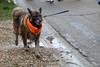 "Protesting against ""Puppy Farms"" (Rick & Bart) Tags: lummen belgium dogs protest puppyfarms antibroodfok rickvink rickbart canon eos70d vzwantibroodfokactie aba wwwbroodfokbe"