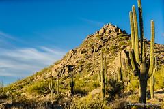 Granite mountain in the morning (doveoggi) Tags: 8274 arizona scottsdale mcdowellsonoranpreserve desert saguaro mountain boulders