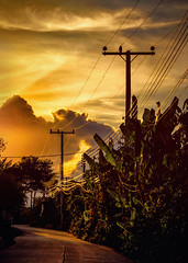 Ohmageddon (Carl's Captures) Tags: sunset evening gold golden light dusk ruralroad powerlines utilitylines electriclines electricitylines powerpoles flora clouds sky skies backlight chiangmaiprovince northernthailand thai siam southeastasia glow glowing undulation vanishinglines converginglines landscape armageddon apocalypse energy road street path foliage leaves nikond5100 tamron18270 photoshopbyfehlfarben thanksbinexo