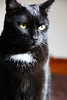 Snowflake (samgi2) Tags: cats haustier tier indoor pets cat kitty kitten pet animal cute gato feline canon nrw germany katzen katze black welpen baby natur tabby