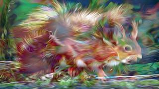 Bildschichten Eichhoernchen 42