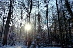 Setting Sun (ivlys) Tags: wald forest baum tree sonne sun landschaft landscape natur nature schnee snow ivlys