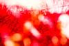 20171228-080 (sulamith.sallmann) Tags: abstract abstrakt analogeffekt analogfilter blur deutschland effect effekt ensdorf filter folie folientechnik germany gitterzaun maschendrahtzaun red rot saarland stacheldraht unscharf zaun deu sulamithsallmann