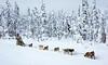 Mush on huskies . . . (JLS Photography - Alaska) Tags: alaskalandscape alaska animal america dogracing dogmushing dograce dogs landscape sport wintersports jlsphotographyalaska winter wilderness snow forest people tree