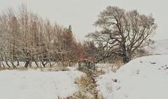 Snowy fence...xx (shona.2) Tags: scotland winter snow hff friday fence